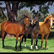 The horse trio panel