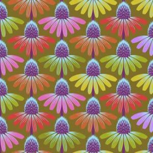 echinacea-autumn
