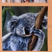 animal panel 3